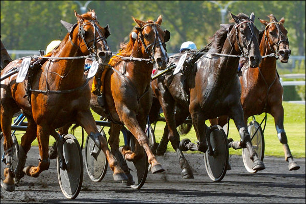 Quinte+ Grand National du Trot